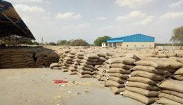 उज्जैन में कहां पड़ा है 18 हजार मीट्रिक टन गेहूं, जानें क्या है खतरा