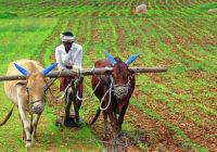उज्जैन के किसानों को चीन जाने का मौका, 24 मई तक भरें फॉर्म